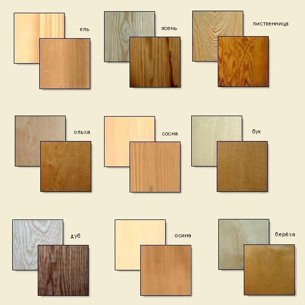 образцы породы древесины